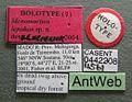 Monomorium lepidum casent0442208 label 1.jpg