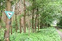 Mooskiefernwald von Dudenhofen03.jpg