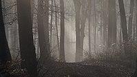 Morgen-Nebel im Wald.jpg