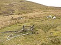 Mosquito remains - geograph.org.uk - 550324.jpg