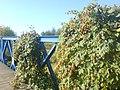 Most nad Czarną - panoramio.jpg