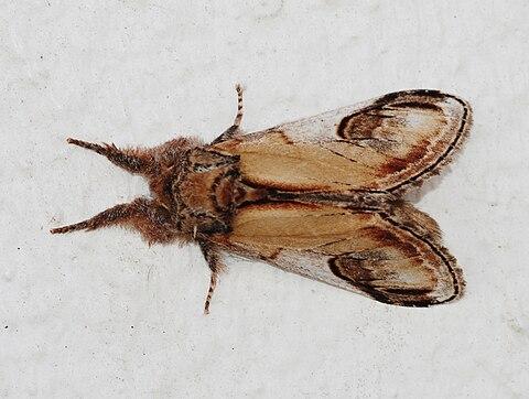 Moth August 2010-4.jpg