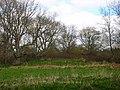Motte and Bailey Earthwork, near Isfield Church - geograph.org.uk - 151056.jpg
