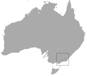 Description de l'image  Mountain Pygmy Possum area.png.