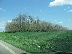 Murphy Mound near Caruthersville.jpg