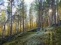 Muuratsalo forest 3.jpg