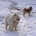 My dogs - Flickr - Stiller Beobachter.jpg