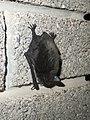 Myotis daubentonii Piazzo 01.jpg