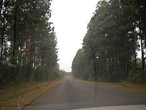 Transport in Malawi - Road to Mzuzu through the Chikangawa man-made forest.