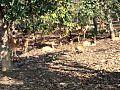 NAGZIRA WILDLIFE SANCTUARY.jpg