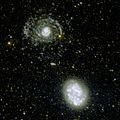 NGC 4625 and NGC 4618 in UV.jpg