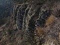 NPP Černé rokle (29) - skalní stěna V sudech.jpg