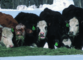 NRCSWY02023 - Wyoming (6911)(NRCS Photo Gallery).tif