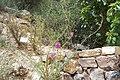 National Botanic Garden of Israel 05.jpg