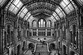 Natural History Museum (8487124000).jpg