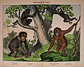 Natural history of the animal kingdom for the use of young people (Plate I) (5974366781).jpg