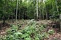 Natural monument Jílovské tisy in summer 2014 (9).JPG