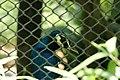 Nature 0190629-WA0085.jpg