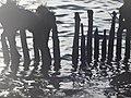 Naturschutzgebiet Ewiges Meer 31-10-2018 Chr Didillon DSC01778 (87).jpg