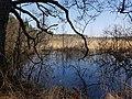 Naturschutzgebiet Großer Rußweiher 05.jpg