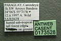 Neivamyrmex orthonotus casent0173528 label 1.jpg