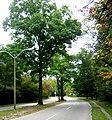 Neoponset Valley Parkway MA 02.jpg
