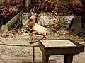 New York has amazing wildlife (34115274803).jpg