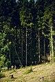 Nishihirayama Ichinowatari, Hirosaki-shi, Aomori-ken 036-8134, Japan - panoramio.jpg