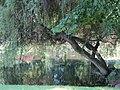 """Niwnice, park koło pałacu """"Neuland"""" (1).JPG"""