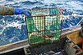 Norway Lobster Creel.jpg
