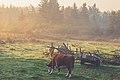 Nova Scotia Pasture Sunrise (25840556113).jpg