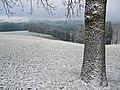 Obergünzburg - Hartmannsberg nördl - Baum m Schneebehang, Schneegrenze 02.jpg