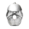 Occipital bone Opisthion09.png