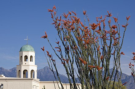 Ocotillos at Valley Presbyterian Church, Green Valley, Arizona Ocotillos and church.jpg