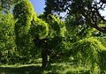 Odesa Chkalova Resort Park 51-101-5046 SAM 9573.jpg