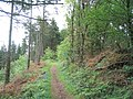 Offa's Dyke Path through Granner Wood - geograph.org.uk - 438484.jpg