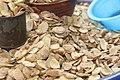 Ogbono seeds.jpg