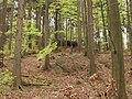 Oldřichovská vrchovina, sever, bučina 03.jpg
