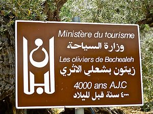 Bcheale - Commemorative plaque given to the village of Bchaaleh on the occasion of the dating of the village's olive trees in 1999