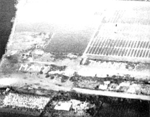 "Dutch famine of 1944–45 - Operation Manna – ""Many Thanks"" written in tulips, Holland, May 1945."
