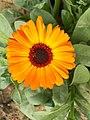 Orange Flower Simple.jpg
