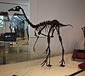 Ornithomimus edmontonicus ROM.jpg