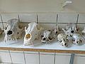 Ostéothèque de Strasbourg (7).jpg