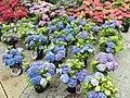 Outdoor flower stall, Sheffield - DSC07456.JPG