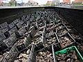 Oyster pits in Yerseke Netherlands 02.jpg