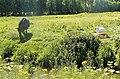 Paarden kunnen ook gevaalijk zijn voor zwanen.JPG