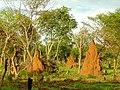Paesaggio savana con termitai in Guinea-Bissau.JPG