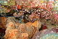 Pair of Shrimps on the Fathom.JPG