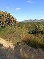 Paisaje de Guanajuato, desde la Sierra de Santa Rosa.jpg