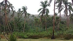 Naviti - Image: Palm trees, Naviti island, Yasawa, Fiji (2) August 2016